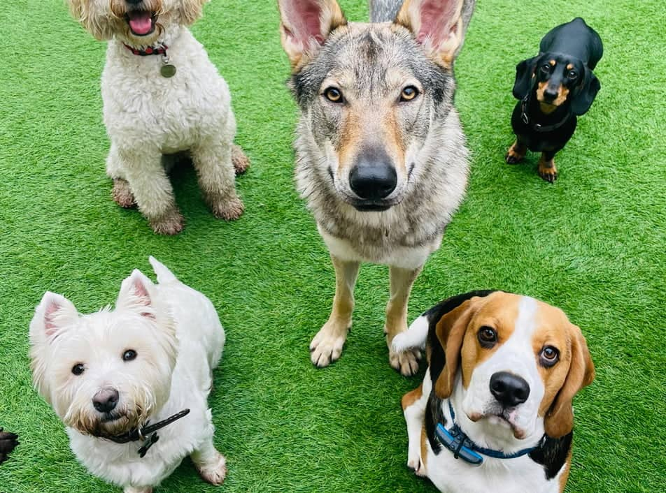 Our Doggy Daycare in Liverpool