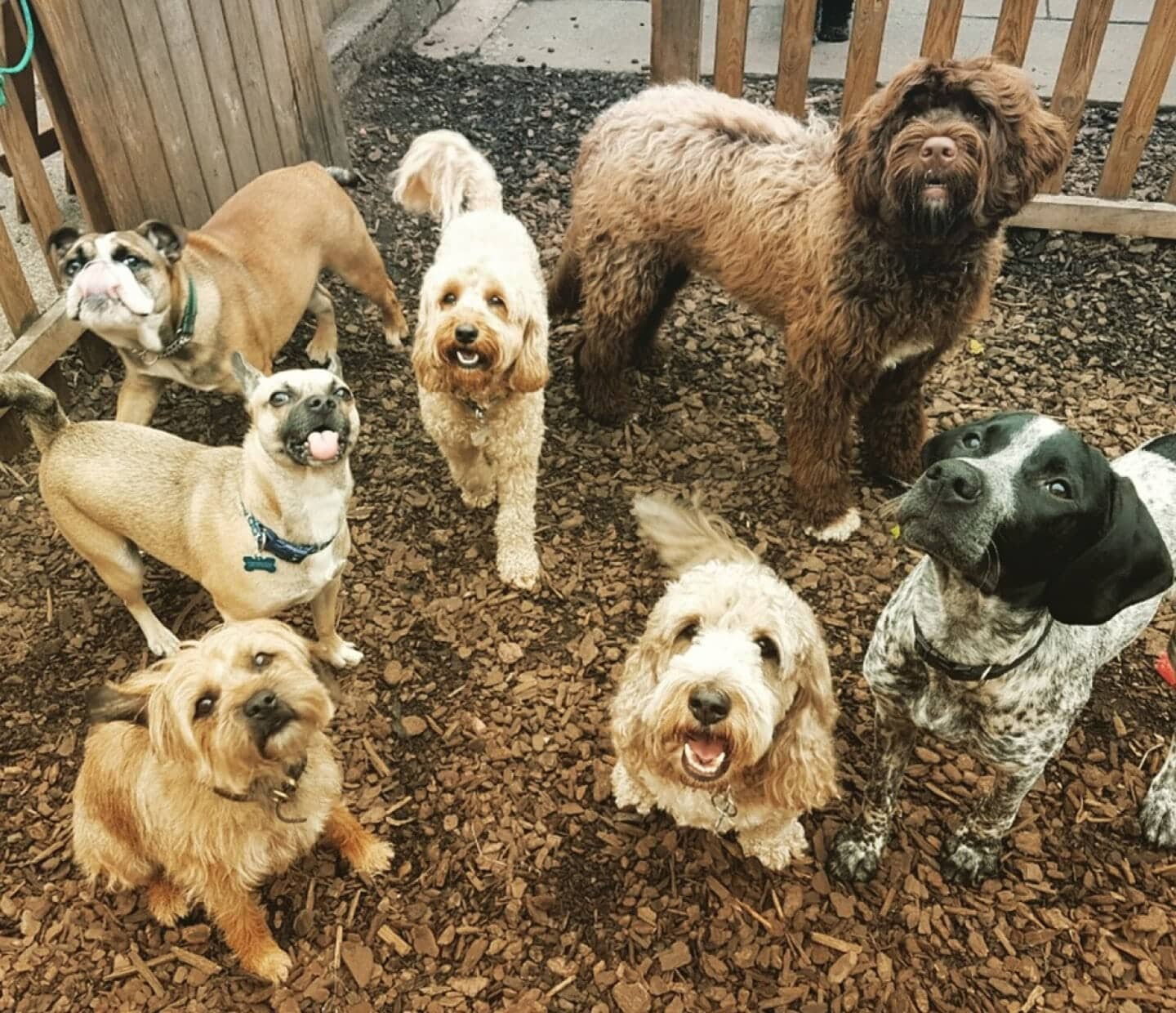 Why Should You Pick Faye's Doggy Boutique for Doggy Daycare?