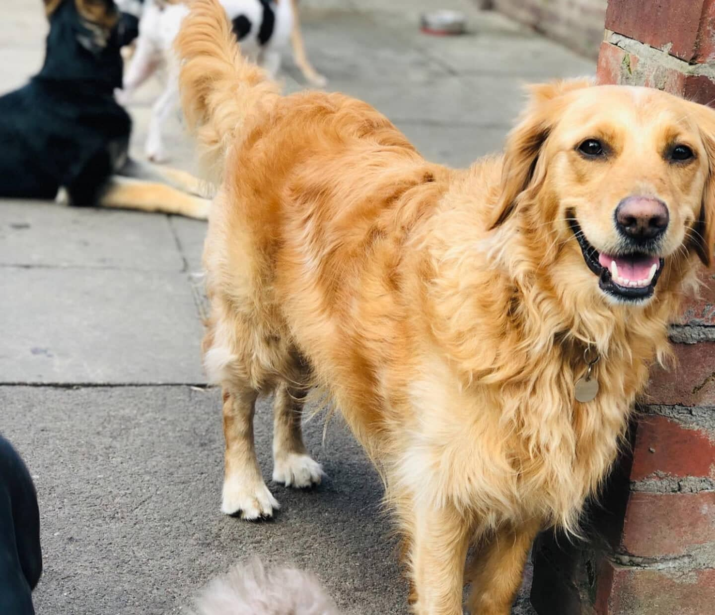 Our Dog Daycare To Re-Open From Today
