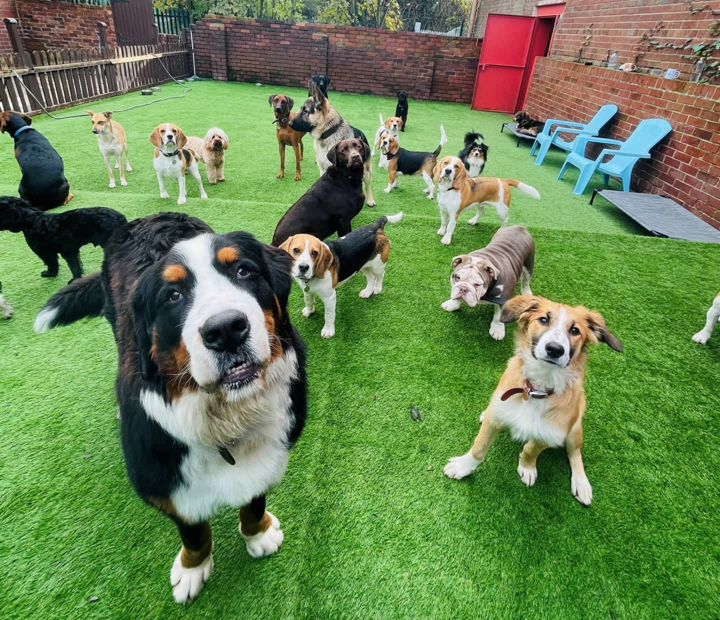 Job Vacancy: We're Looking for a Doggy Day Care Assistant