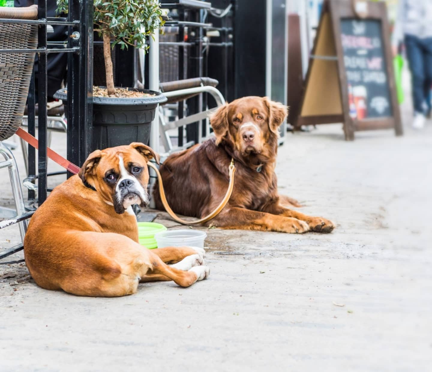7 of the Best Dog Friendly Pubs and Restaurants in Liverpool