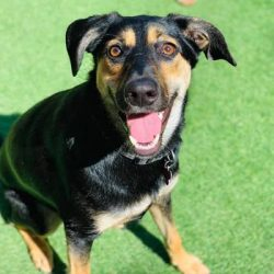 Kyra the Romanian Rescue Dog