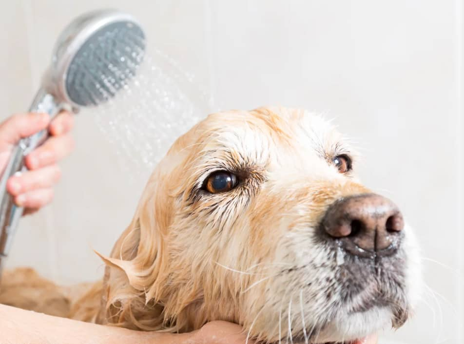 Dog Grooming in Liverpool